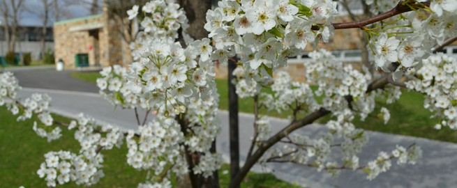 Tree flowers blossoming