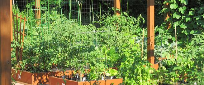 Garden on campus