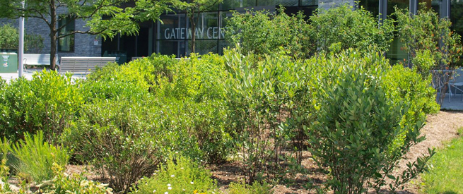 Gateway Center Garden